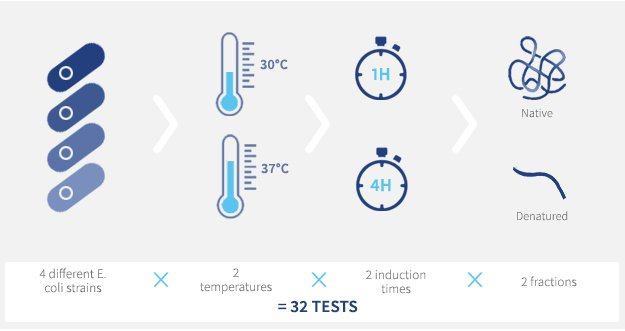 4 different E.coli strains x 2 temperatures x 2 induction times x 2 fractions = 32 tests !