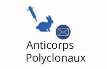 Anticorps Polyclonaux
