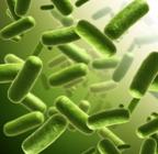 Protein production in E. coli