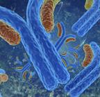 Recombinant antibody production services